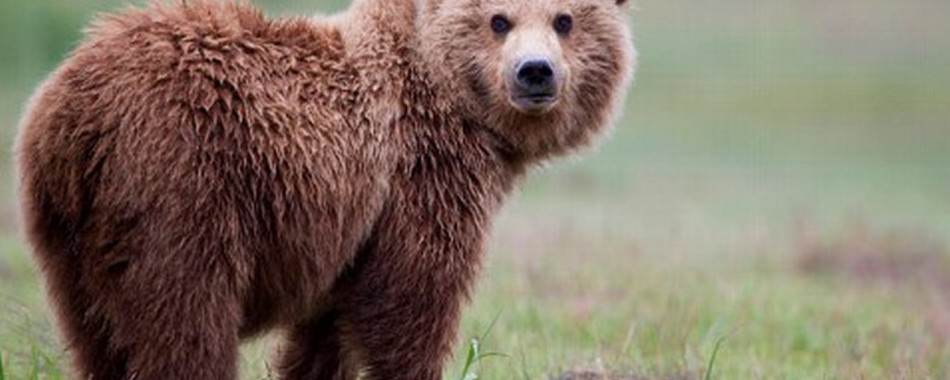 Priključi se timu Bear Sanctuary